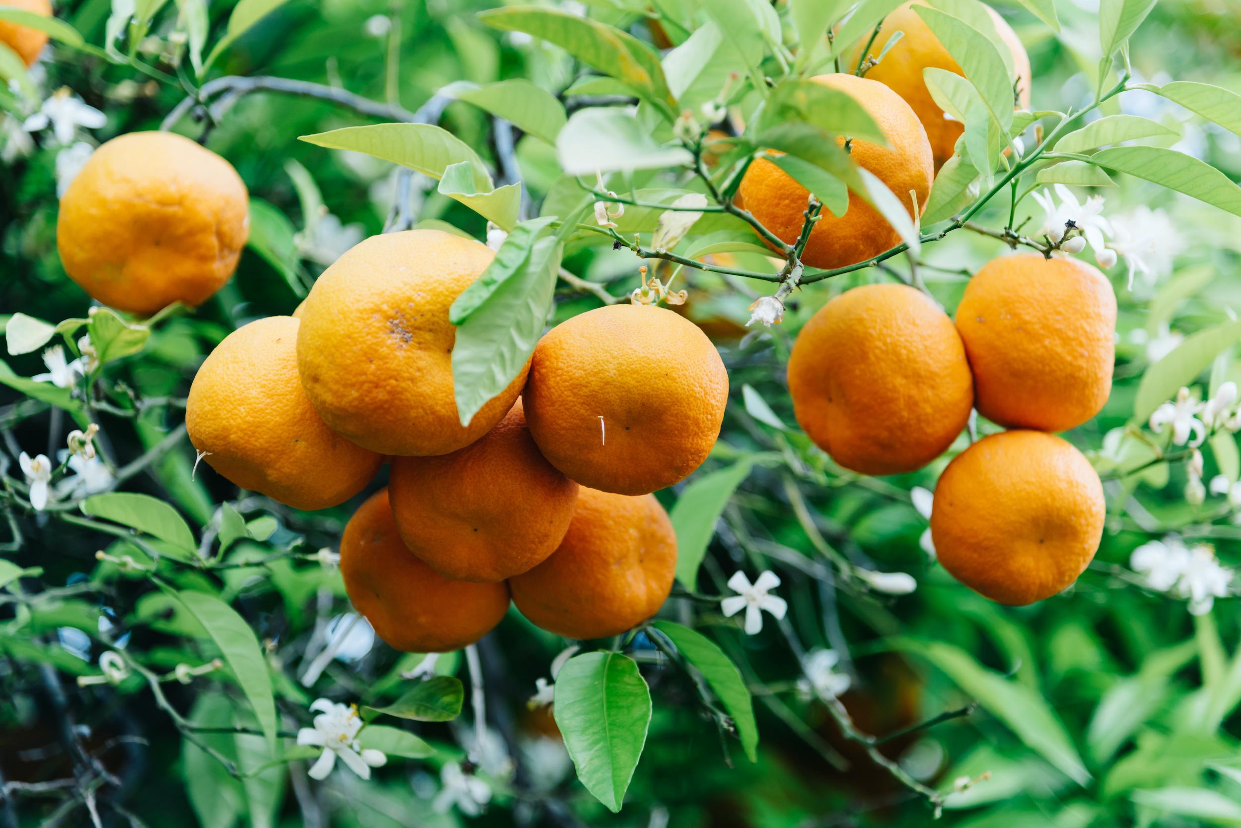 orange nexira