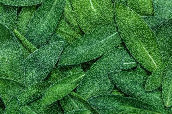 herb nexira