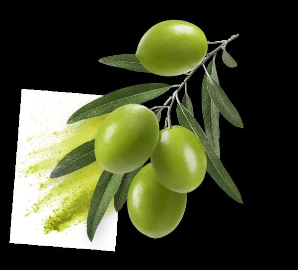 oliola ingredient