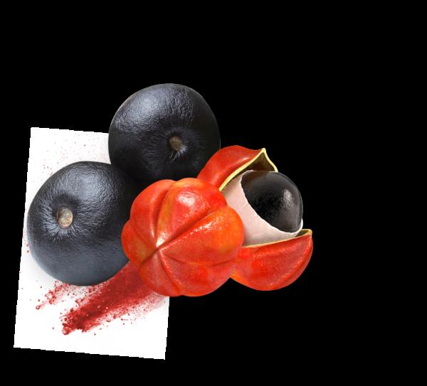 guarana ingredient