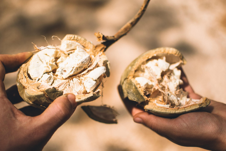 superfruit baobab