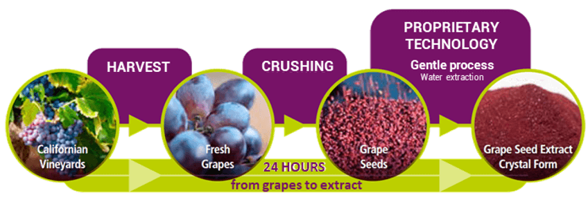 GrapeSeed Extract process