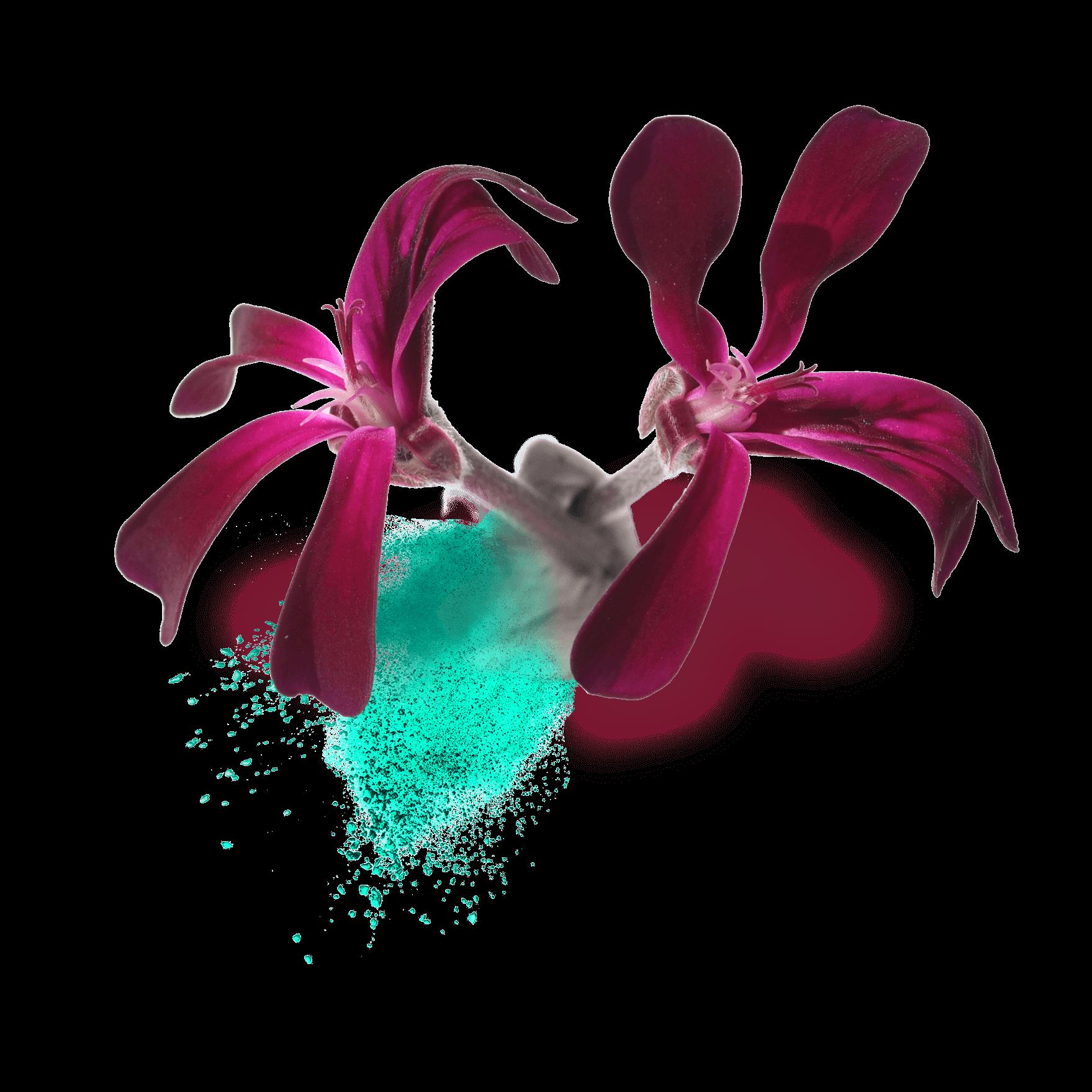 Pelargonium Extract