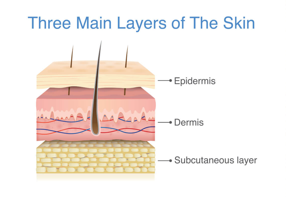 three main layers of the skin