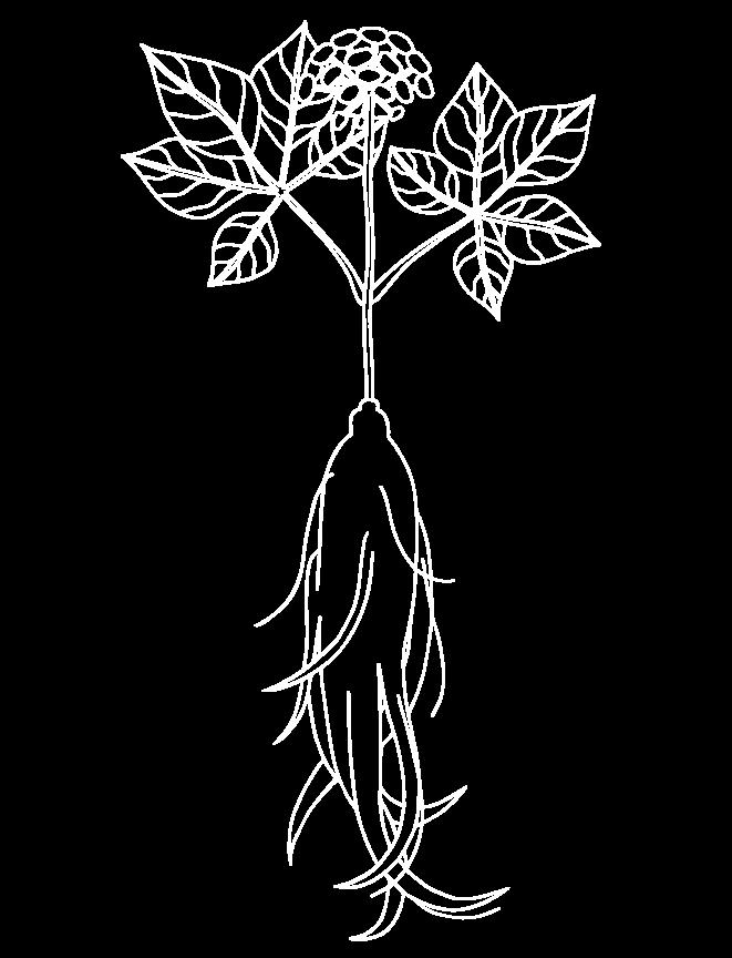 Ginseng Nexira