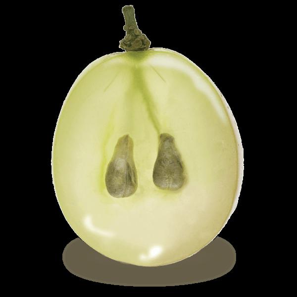 Grape(1Grains+pepins)